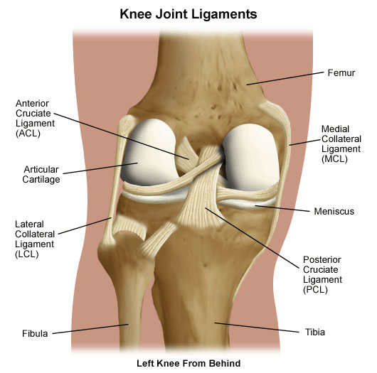 Learn About Posterior Cruciate Ligament (PCL) Injuries ...